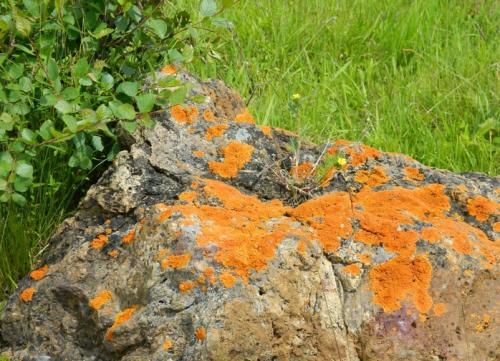 плесень на камне