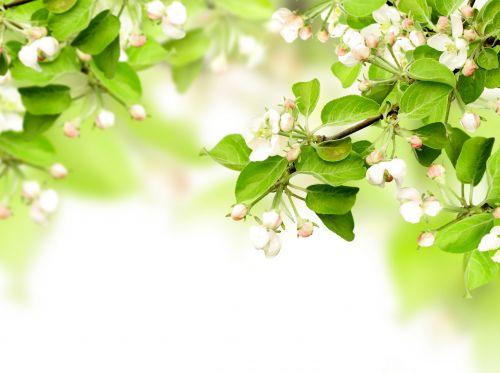 vesna-vetki-listya-cvety